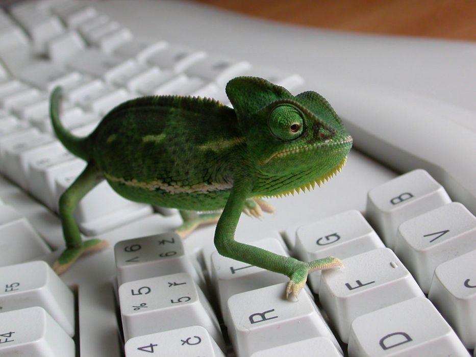 keyboards reptiles iguana wallpaper
