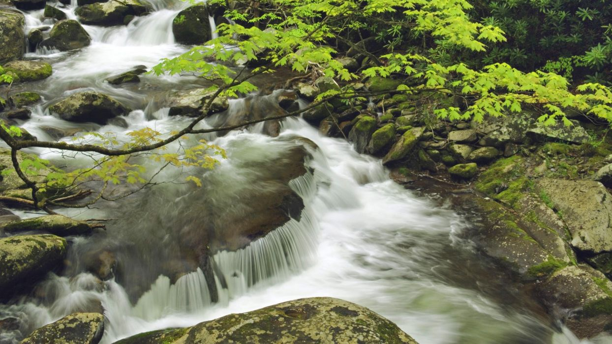landscapes nature spring Tennessee National Park Great Smoky Mountains wallpaper