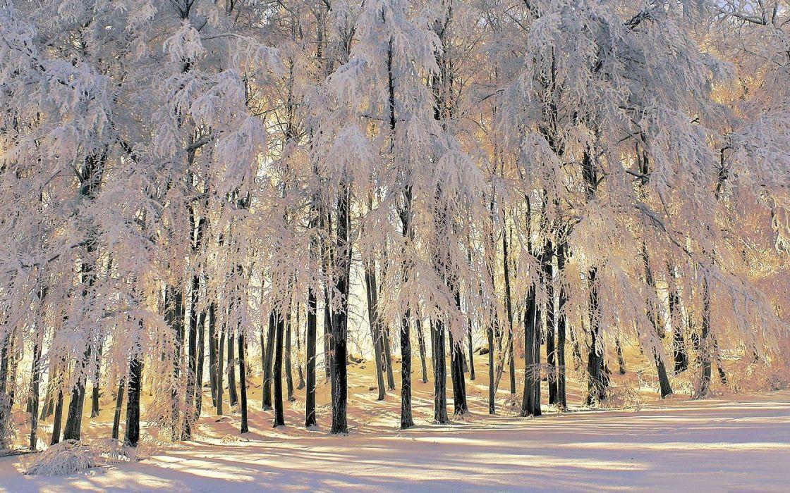 landscapes nature winter forests wallpaper