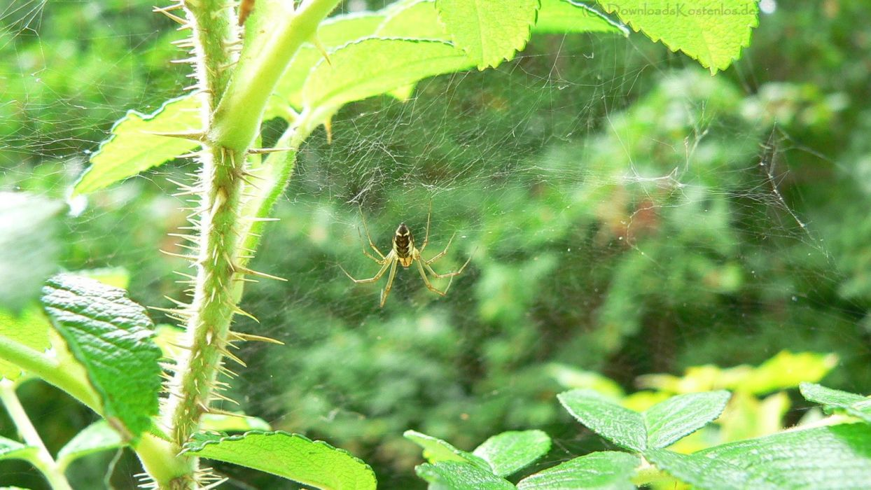 nature web spiders wallpaper