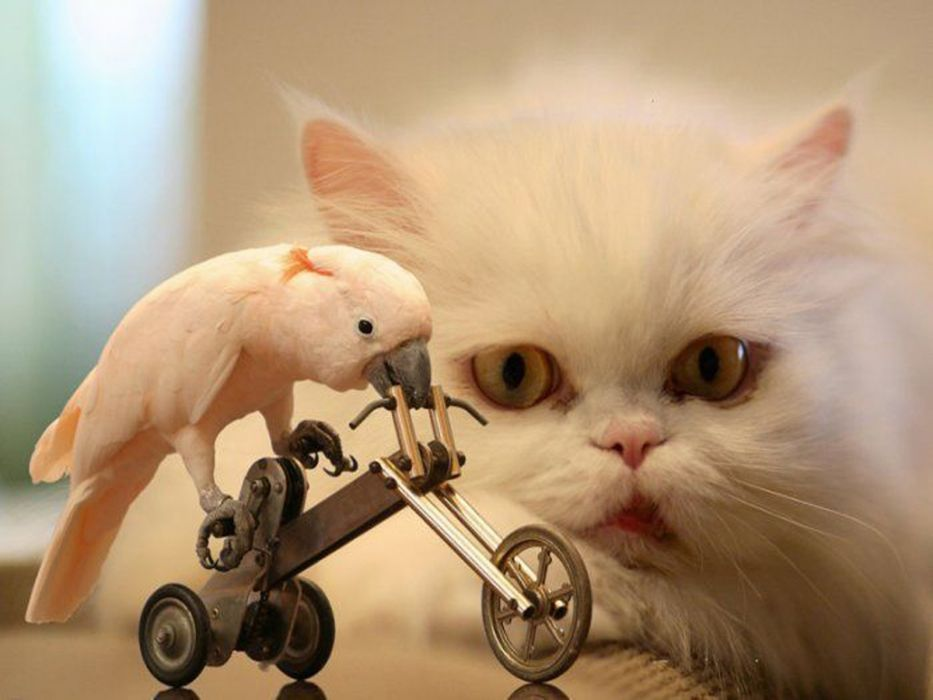 birds cats bicycles WTF funny wallpaper