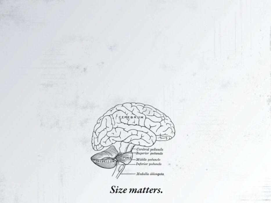 brain drawings simple background wallpaper