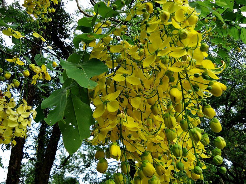 nature trees flowers yellow wallpaper