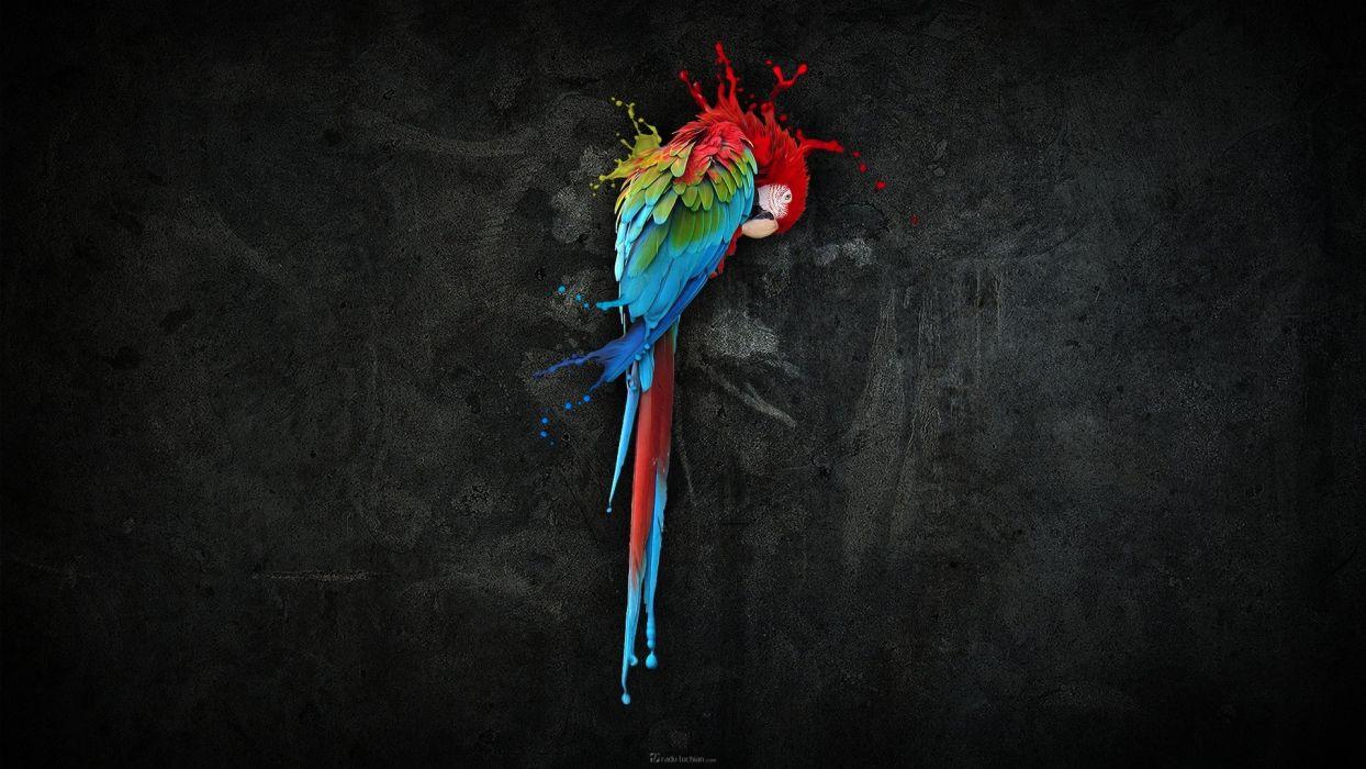 multicolor birds parrots Scarlet Macaws wallpaper