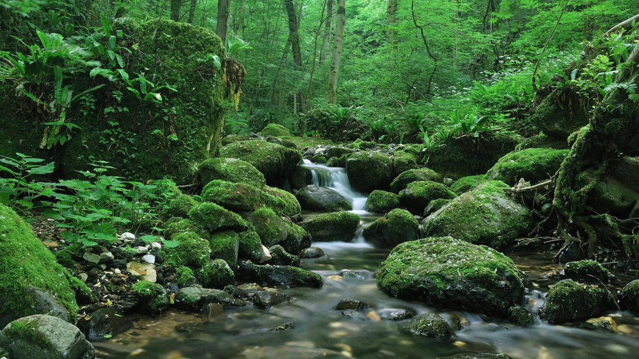 water landscapes forests rivers wallpaper