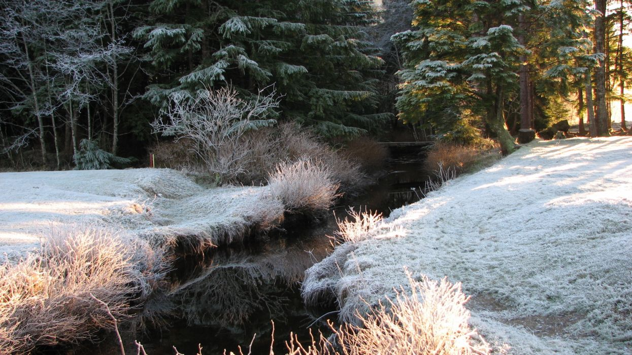 forest trees frost river landscape autumn winter    f wallpaper