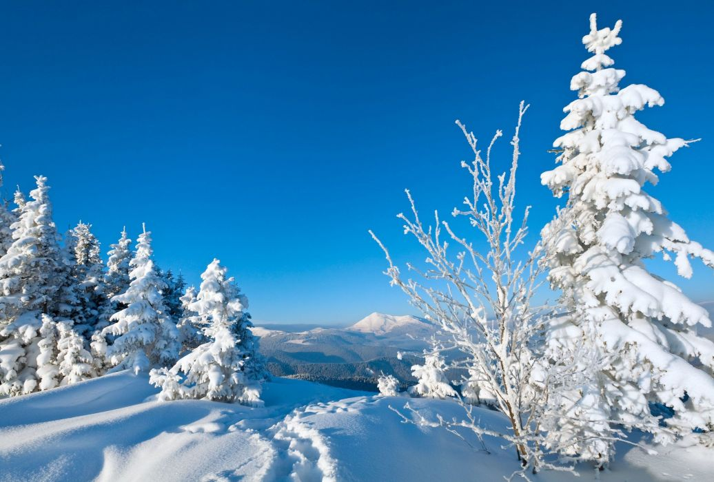 tree nature snow winter trees wallpaper