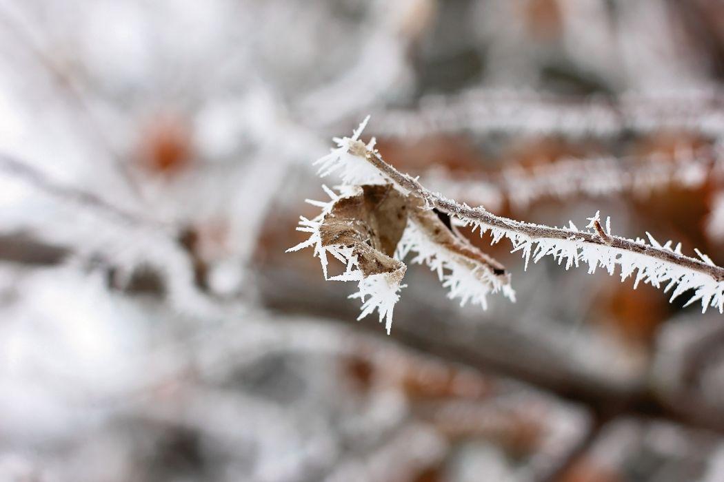 leaf branch snow ice frost macro autumn wallpaper
