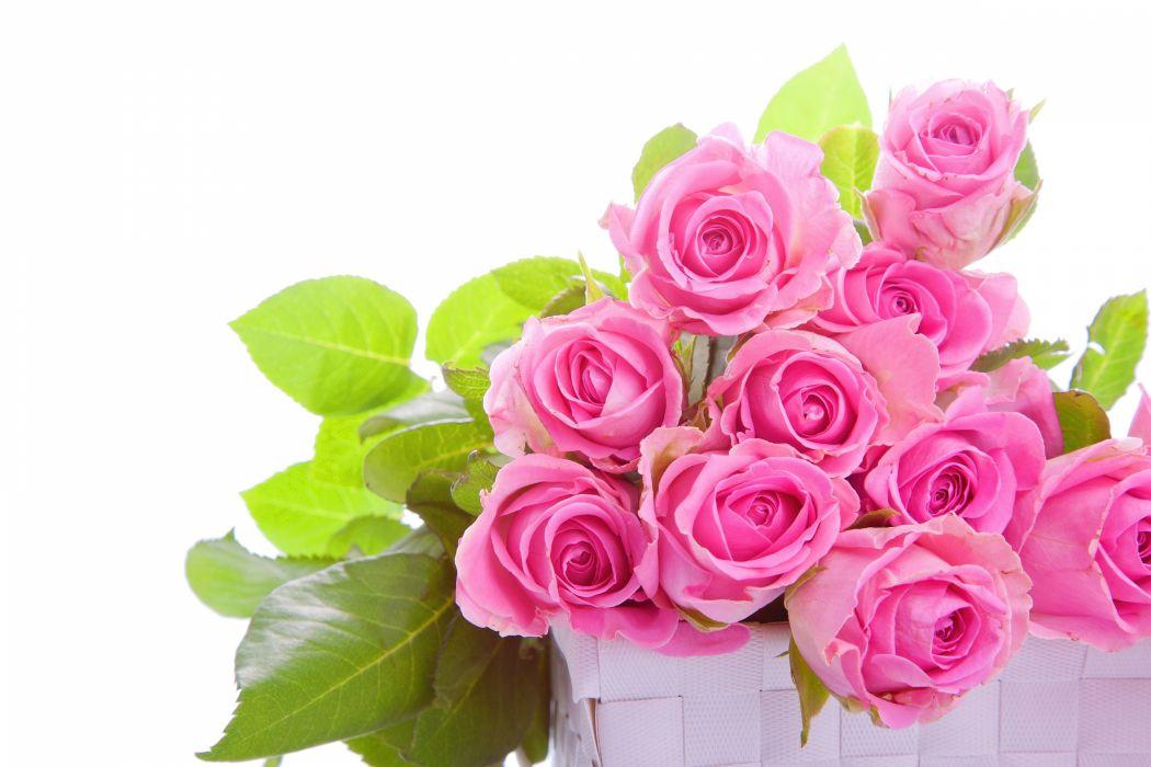 roses buds wallpaper