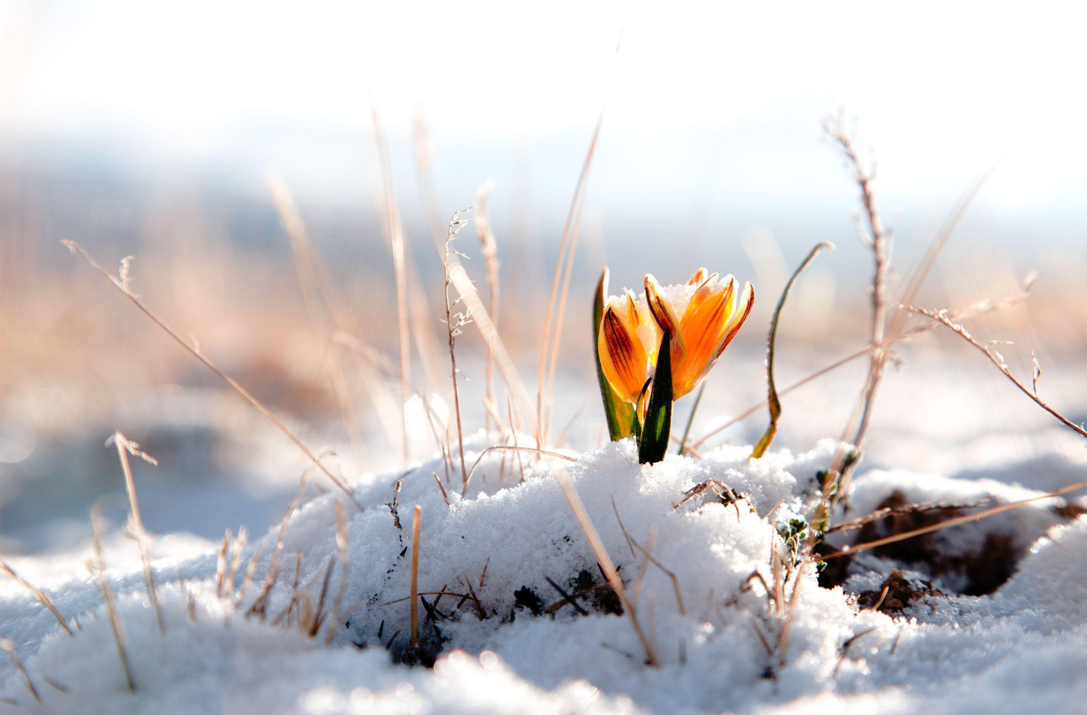 Winter snow flower wallpaper 3800x2500