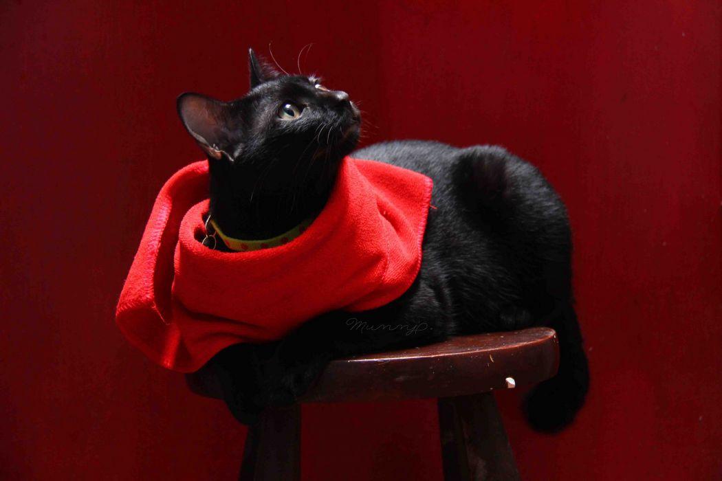 cat stool black cloth wallpaper