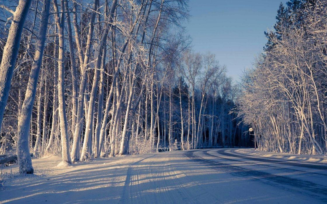 winter road nature trees snow wallpaper