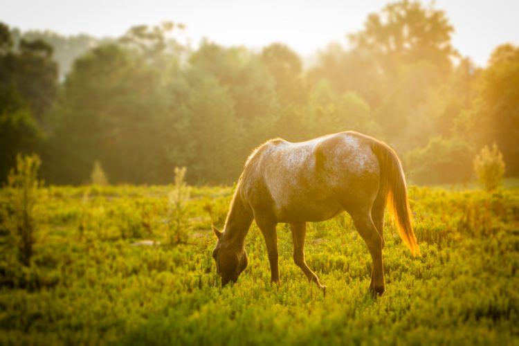animals grass green horse wallpaper