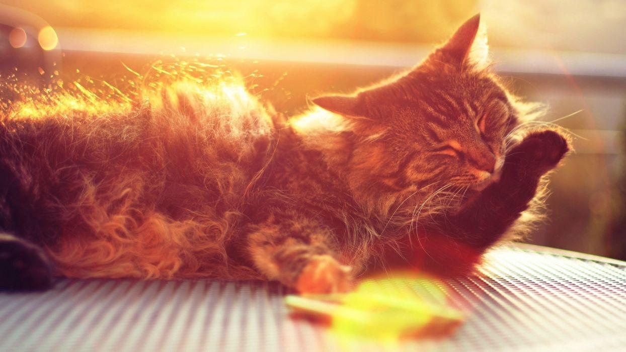 cat muzzle wallpaper