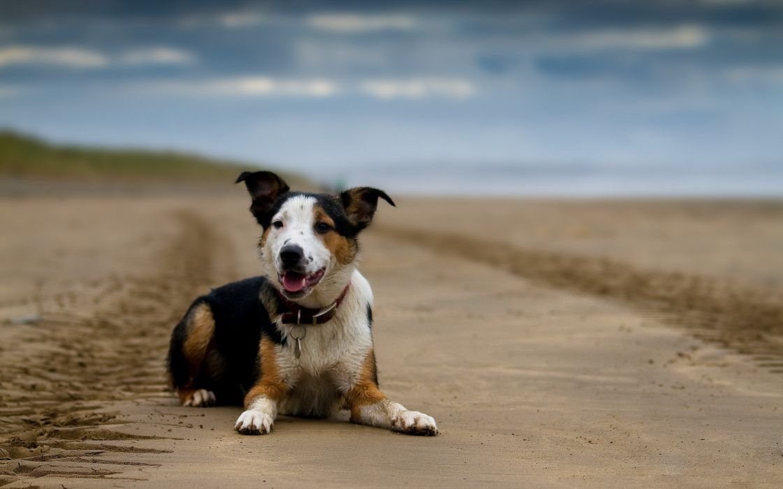 dog the view each wallpaper