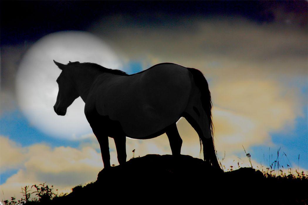 horse silhouette moon wallpaper