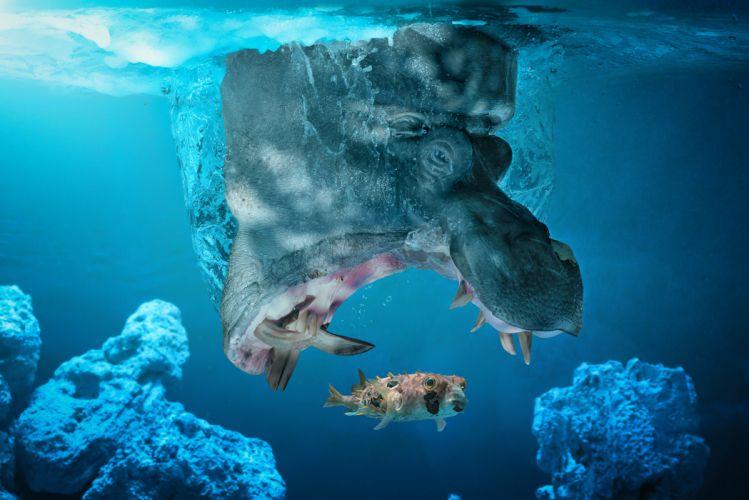 behemoth fish the situation hippo underwater wallpaper
