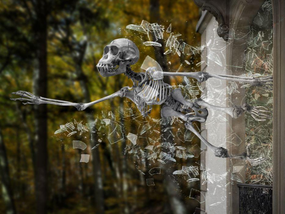 skeleton museum exhibit escape glass shards skull monkey wallpaper
