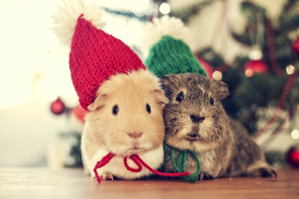 tree sweet animals christmas cute bokeh wallpaper