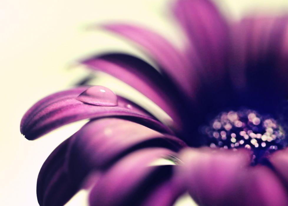 close-up flowers drops wallpaper