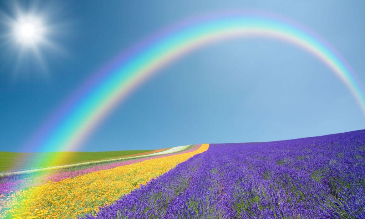 landscape nature field fields flowers flowers purple yellow green rainbow sky sun wallpaper
