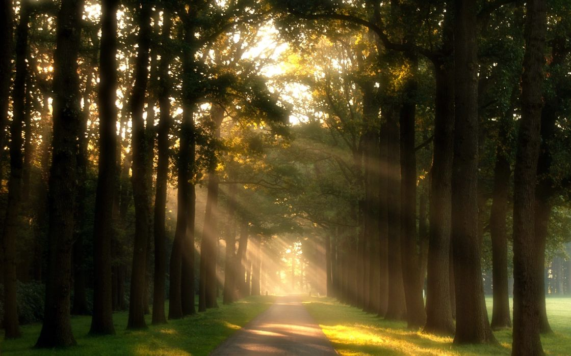 nature trees path walkway green meadow grass day sun rays wallpaper