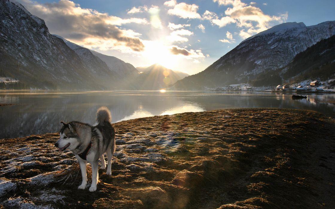 Dog Husky Sunlight Landscape Lake Mountains wallpaper