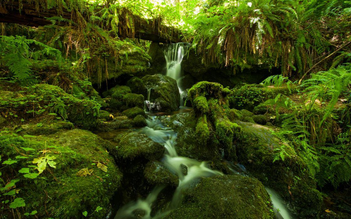 Forest Jungle Green Stream Timelapse Moss Fern Rocks Stones wallpaper
