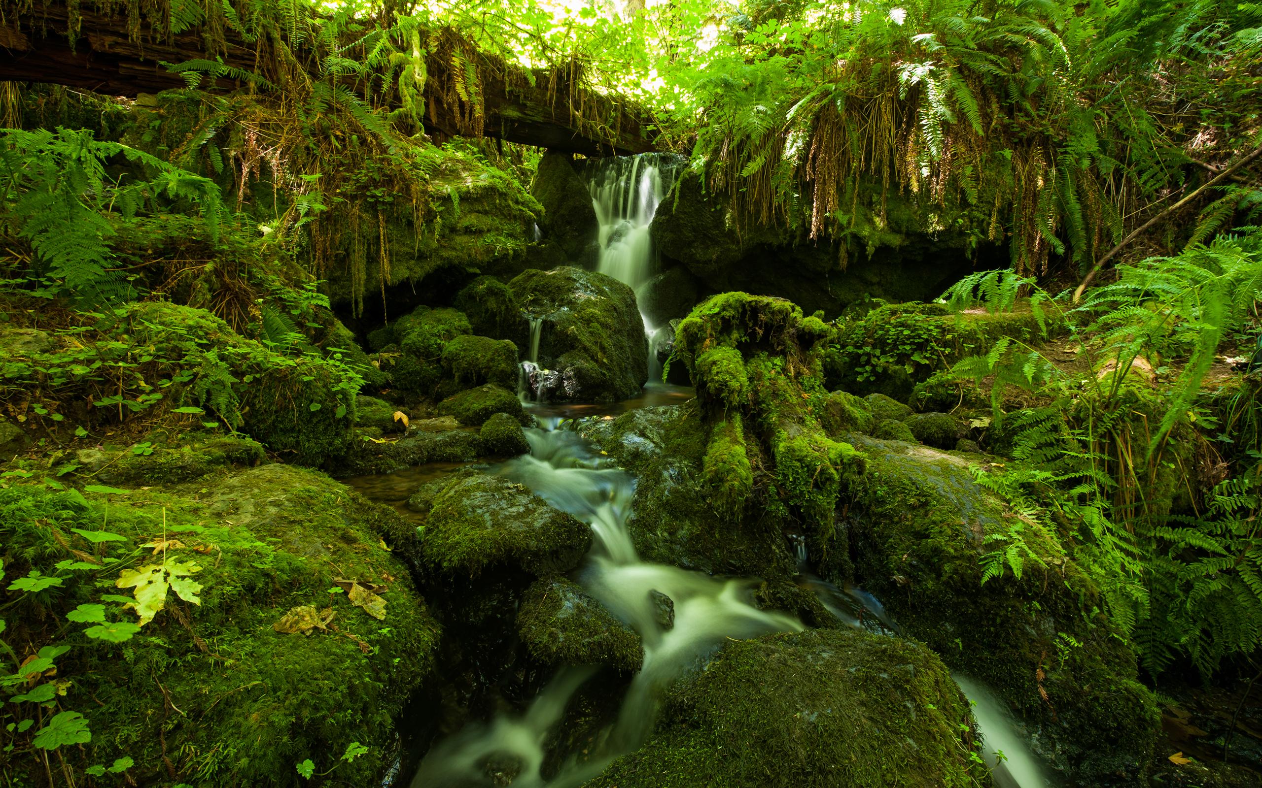 Forest Jungle Green Stream Timelapse Moss Fern Rocks ...