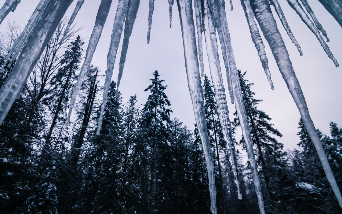 Icicle Winter Trees Forest ice wallpaper