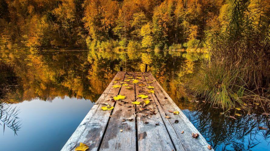 nature trees autumn lakes wallpaper