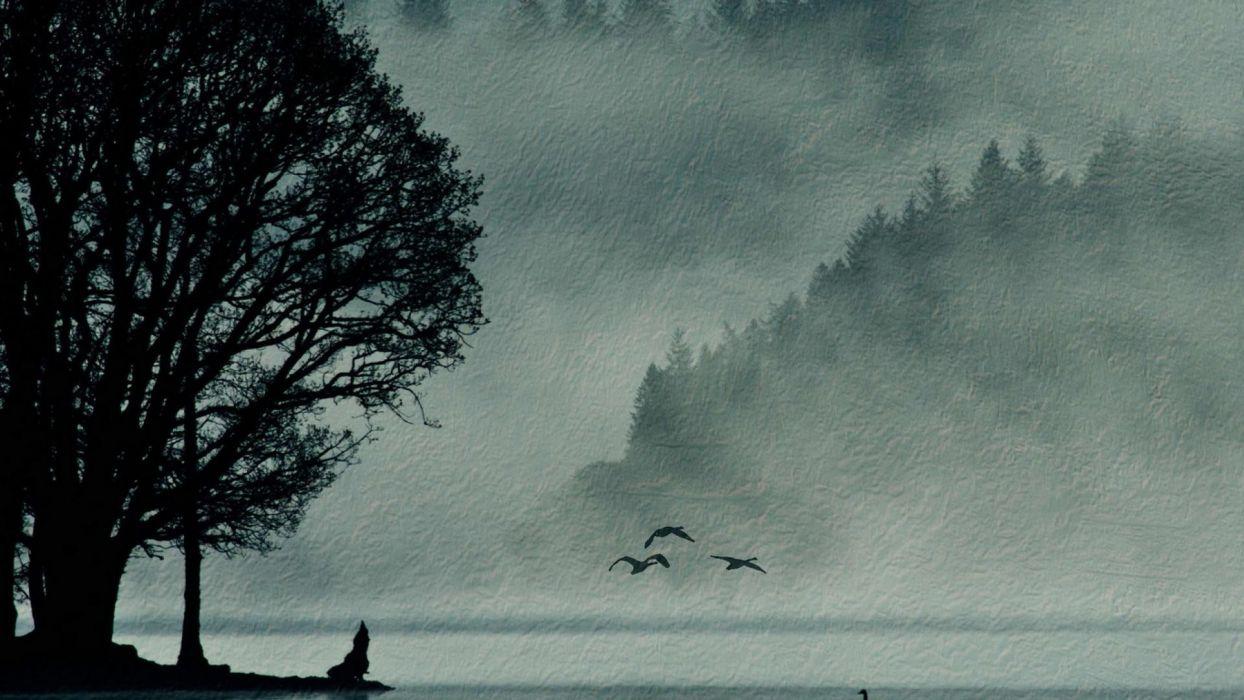 landscapes nature birds wallpaper