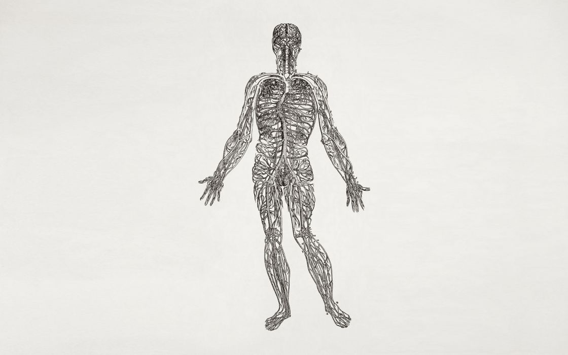 anatomy human body nerves wallpaper
