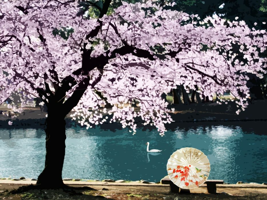 water cherry blossoms wallpaper