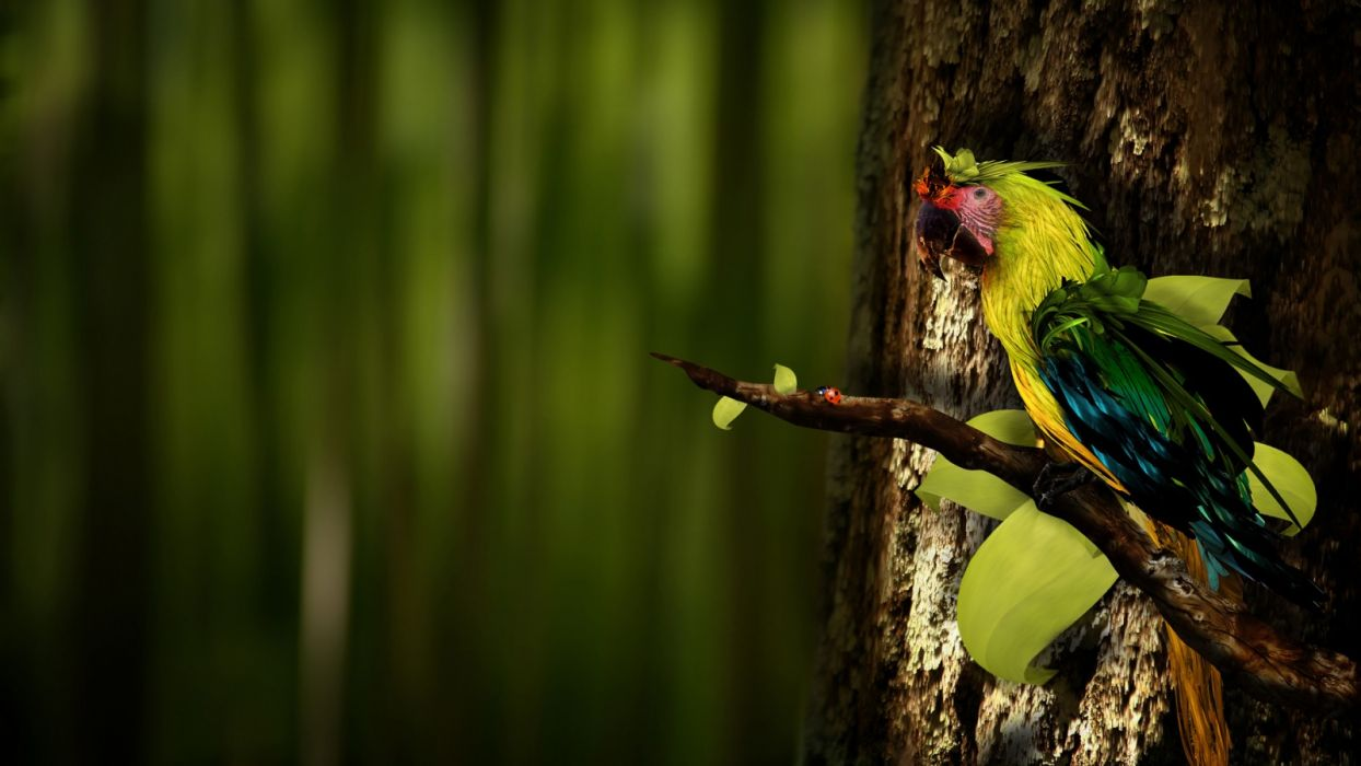 birds parrots tree trunk blurred background wallpaper