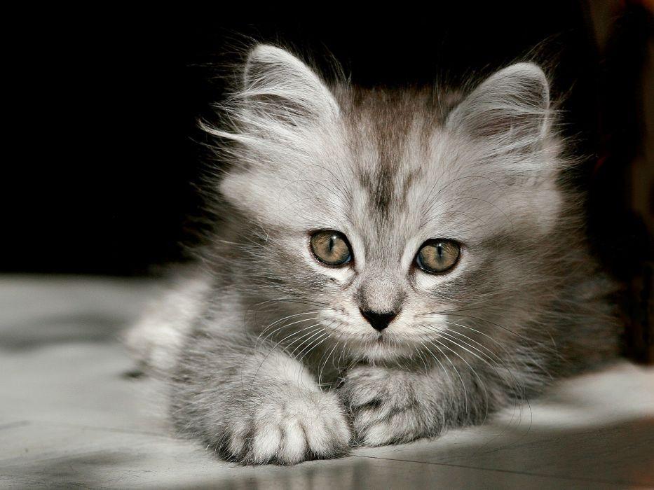 close-up cats animals kittens wallpaper