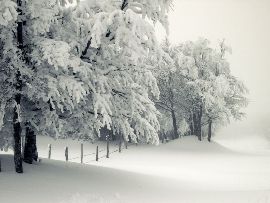 landscapes nature snow trees wallpaper