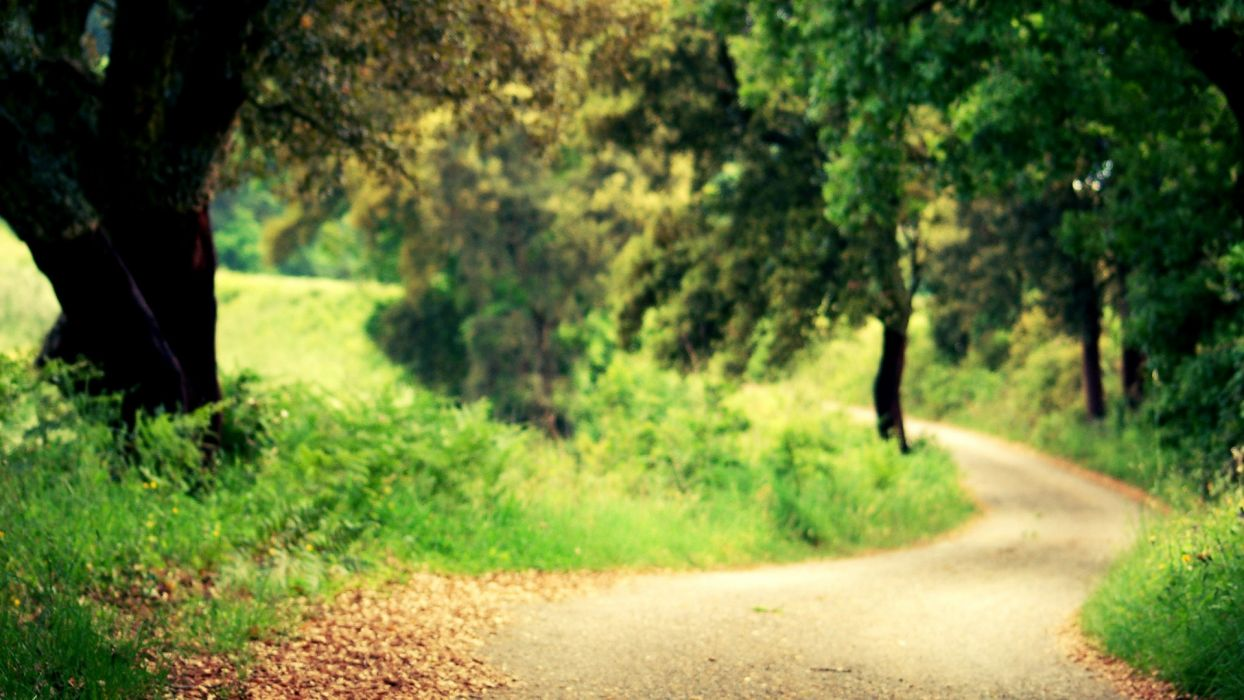 trees forests roads wallpaper
