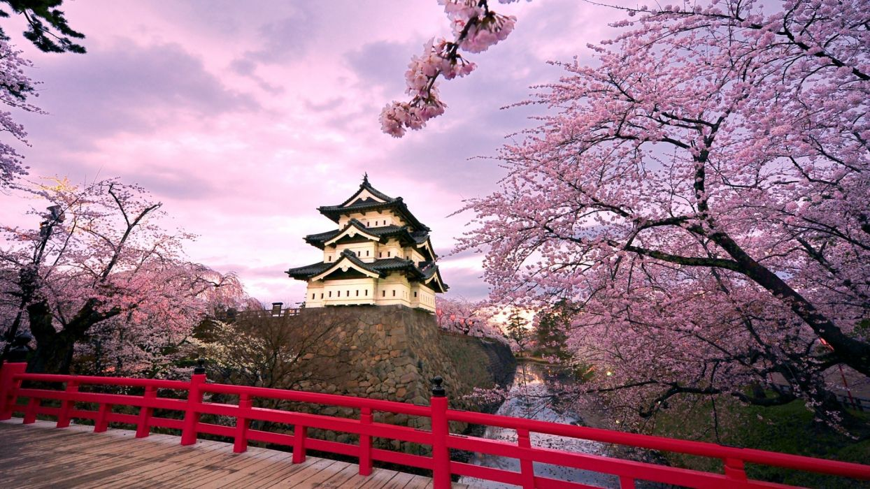 Japan cherry blossoms blossoms temples japanese bridge wallpaper