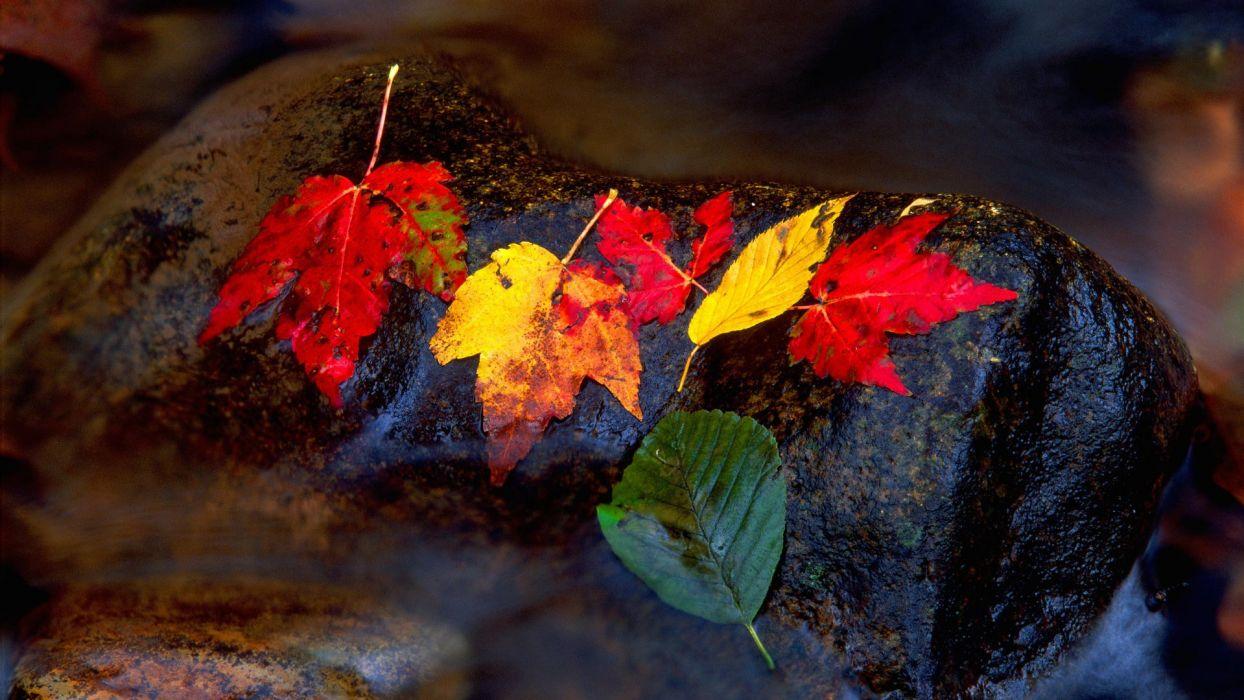 autumn leaves fallen leaves wallpaper