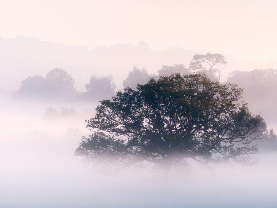 nature trees fog mist morning wallpaper