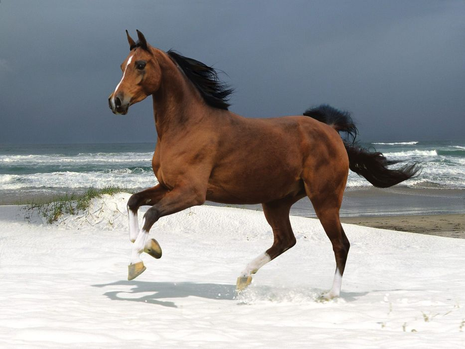 ocean animals brown horses running wallpaper