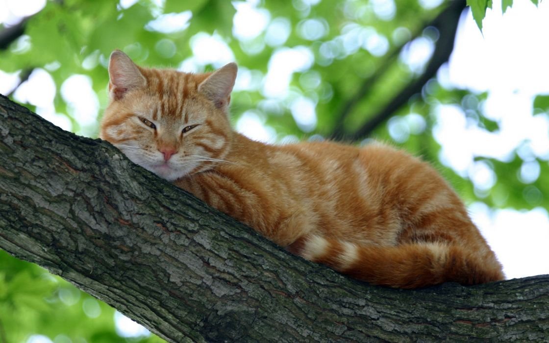 nature trees cats animals lying down wallpaper