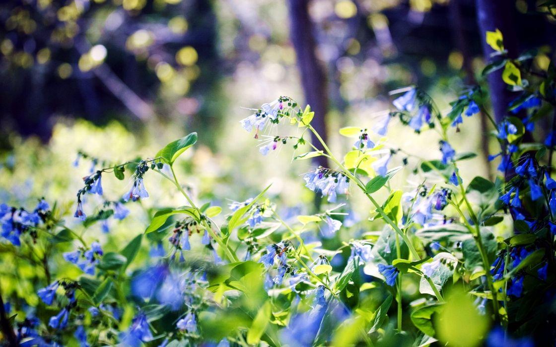 nature flowers leaves bokeh blue flowers wallpaper
