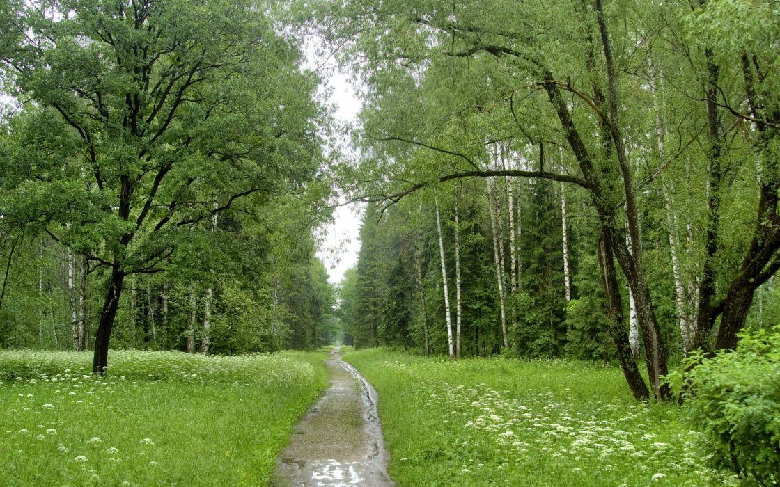 landscapes nature forests roads wallpaper