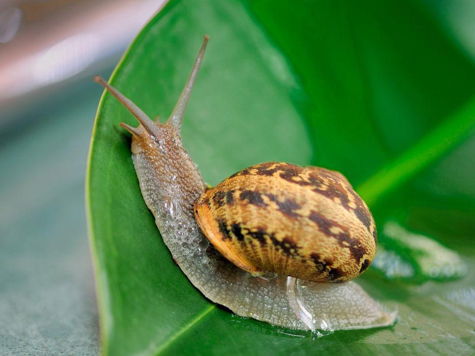 snails mollusks wallpaper