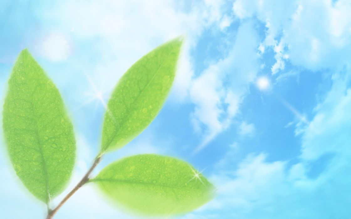 nature leaves dreamy skyscapes wallpaper