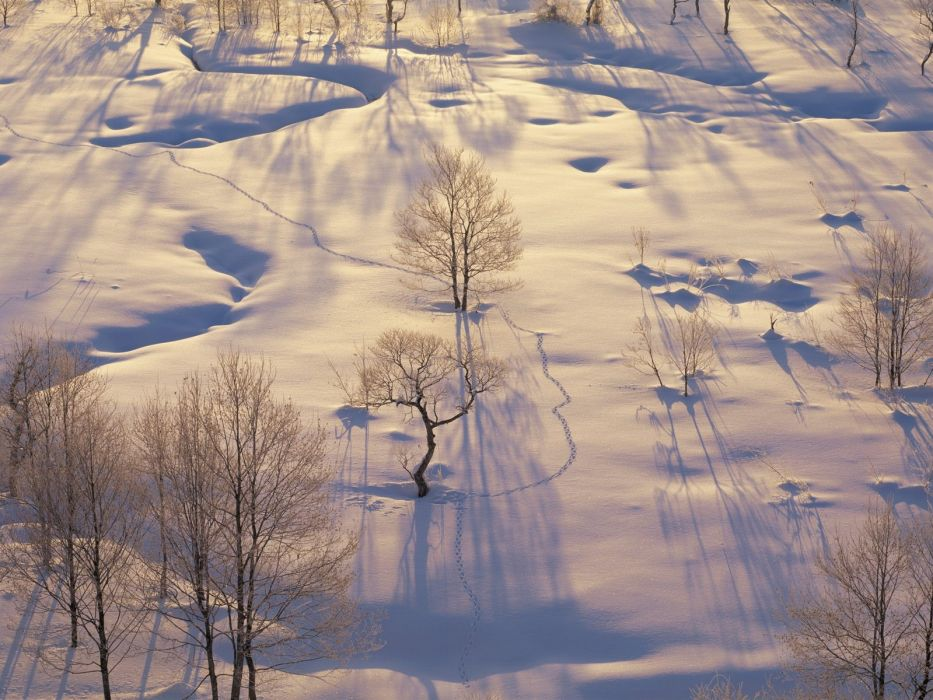 landscapes nature winter snow trees HDR photography wallpaper