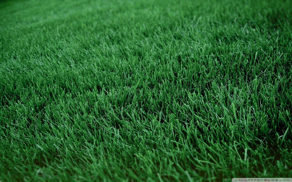 fresh cut grass-wallpaper-1920x1200 wallpaper