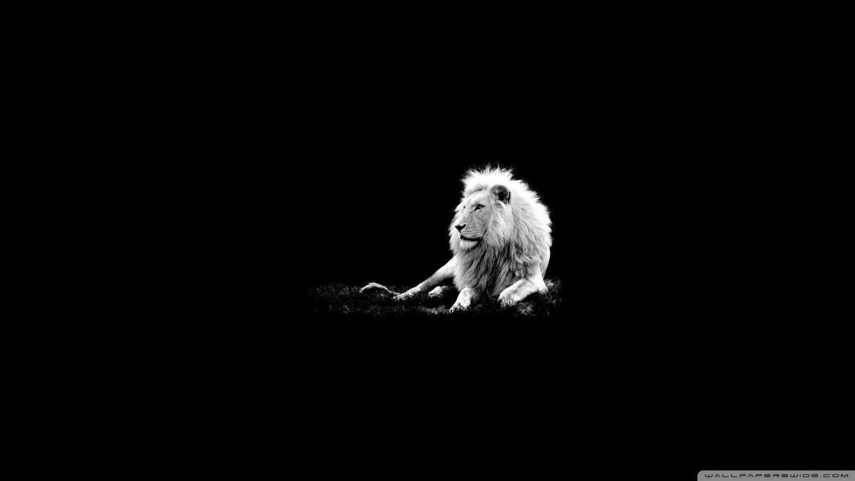 lion 11-wallpaper-1920x1080 wallpaper